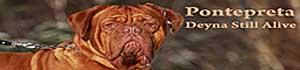 Reproduktor Deyna Still Alive Dogue de Bordeaux
